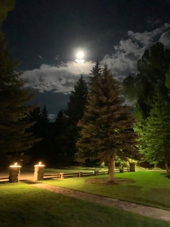 creede moonlight antlers